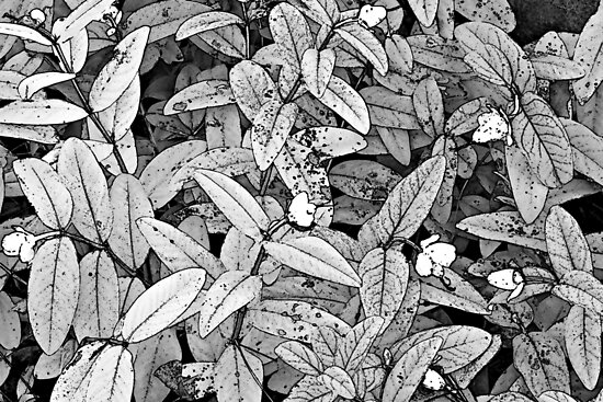 Leaves with Small Flowers © by Ethna Gillespie