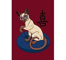 Siamese Chinese Cat Photographic Print