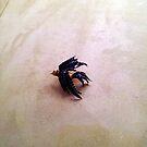 """Little Blue Bird"" by kittenofdeath"
