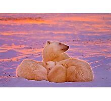 Polar family sunset Photographic Print