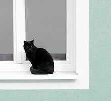 Black Cat in the Window on Mint Green by BrookeRyanPhoto