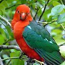 Australian Native King Parrot by Margaret Stockdale