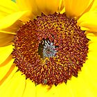 Sunflower Centre by AnnDixon