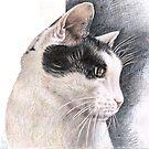 Cats Eye by Nicole Zeug