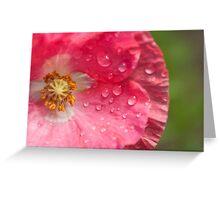 wet pink poppy Greeting Card