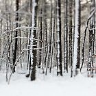 Snowy Woods by Debbra Obertanec