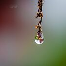 Hang on  by Mark Williams