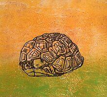 Peek-a-boo tortoise! by CarmenH