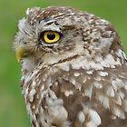 Portrait Little Owl by Peter Wiggerman