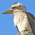 Kookaburra in Profile by Graeme  Hyde