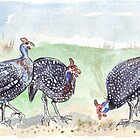 The Guineas are back! by Maree  Clarkson