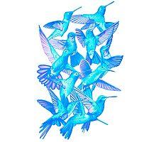 Hummingbird Dance in Sharpie (IceBird Edition) Photographic Print