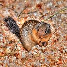 Marmot Munchies by Skye Ryan-Evans