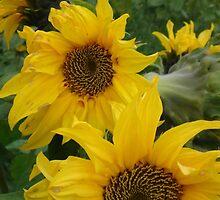 Sunflower invasion by Solmaja