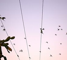 Birds in Motion by Damian