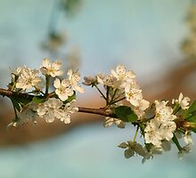 The Pear Tree in Spring Bloom by Eileen McVey