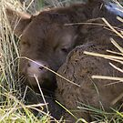 Newborn Naps by Laura Sykes