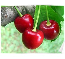 Ukrainian Cherries Poster