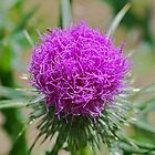 Thistle Head by Penny Smith