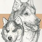 Siberian Husky Father & Son by BarbBarcikKeith