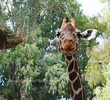Giraffe With Feeder by AlySmyphoto1
