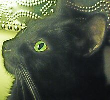 Black Cat by maryjanetait