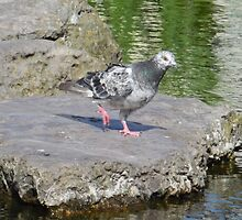 Stepping Stones and Winging It by maryjanetait