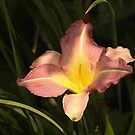Glowing Lily by Linda  Makiej Photography