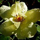 Rain or Shine by mussermd