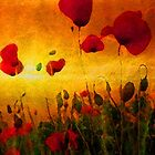 Poppy Sunset by Bunny Clarke