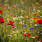 Wildflowers by Theresa Elvin