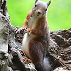 a squirrle smile... by Nicole W.