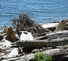Driftwood at Lincoln Park by David W. Trotter