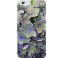 Last days of a blue hydrangea flower iPhone Case/Skin