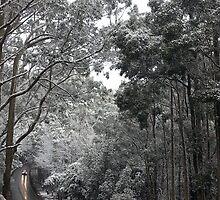 Snow, Mt Macedon ll by MIchelle Thompson