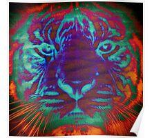 Tiger_8533 Poster