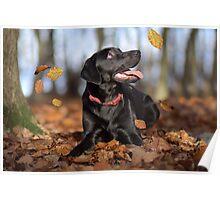 Just loving Autumn Poster
