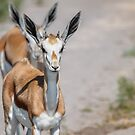 Springbok Tailgater by Owed to Nature