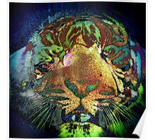 Tiger_8543 Poster
