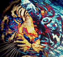 Tiger_8562 by AnkhaDesh