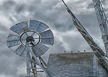 Gulls on the mill by Mortimer123