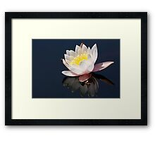 Water Lilly 6025 Framed Print