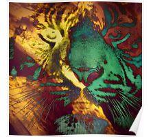 Tiger_8618 Poster