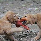 Jenny & Gimli Tug O War by goldnzrule