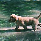 Gimli - Walking on Water by goldnzrule