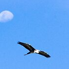 Pacific White Heron Flies passed the Moon by pcbermagui