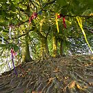 Avebury Tree roots by Angie Latham