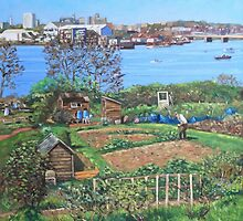 Allotments at Southampton beside River Itchen by martyee