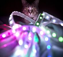 Disco Cat by Roddy Atkinson