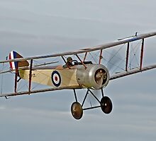 Sopwith Pup in flight by DonMc